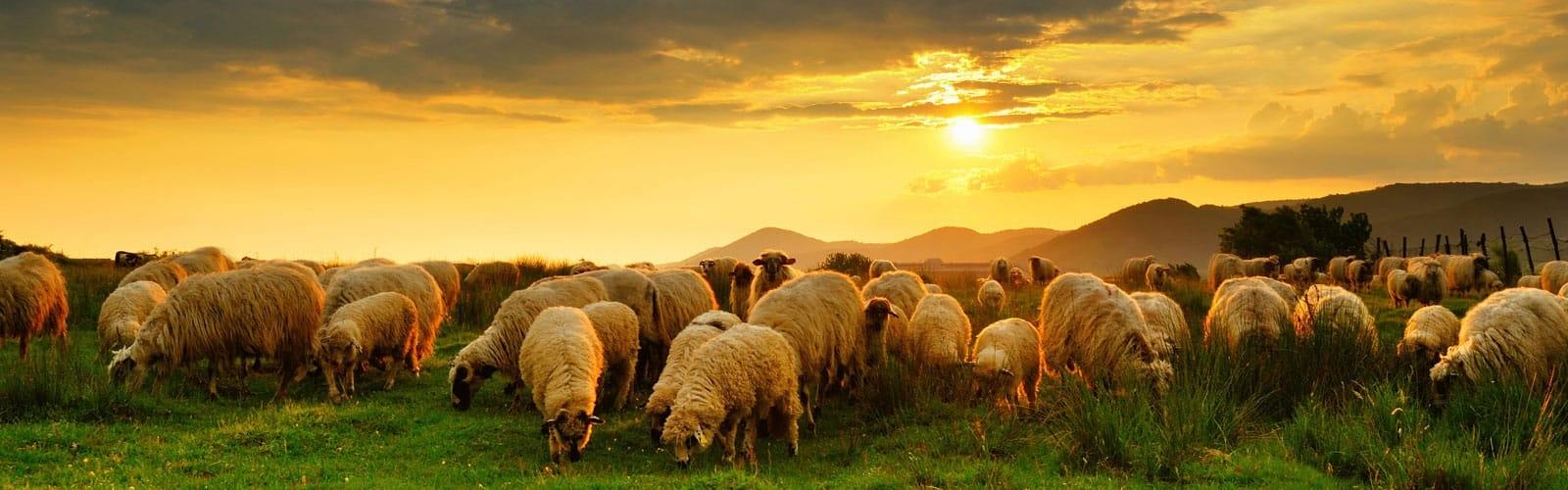 Elders: Shepherds for God's Church