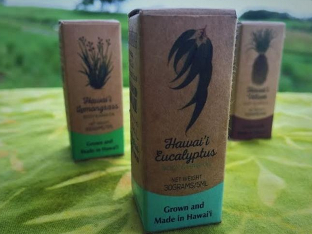 Therapeutic Grade Eucalyptus Oil - Refreshing & Stimulating & Offers Respiratory Support, & Relief From Fatigu