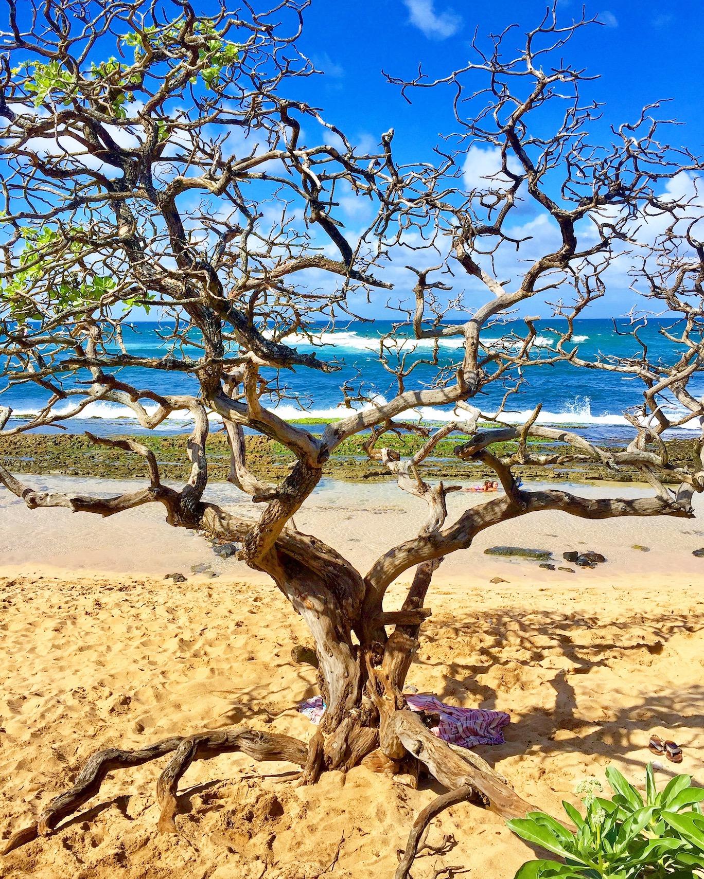 web-design-pueo-creations-maui-hookipa-beach