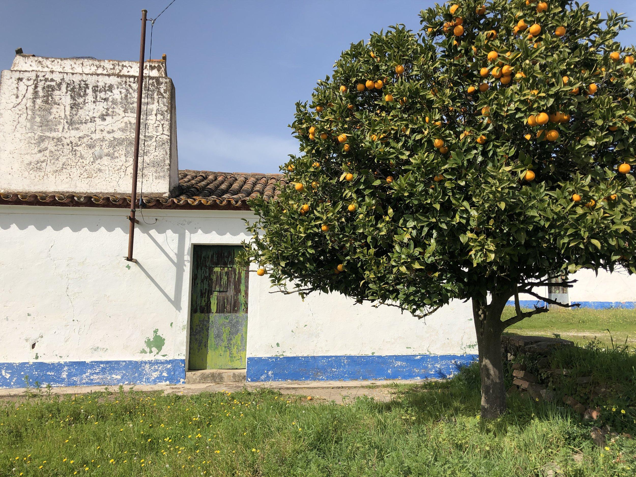 WildTerrains_Portugal_3.jpg