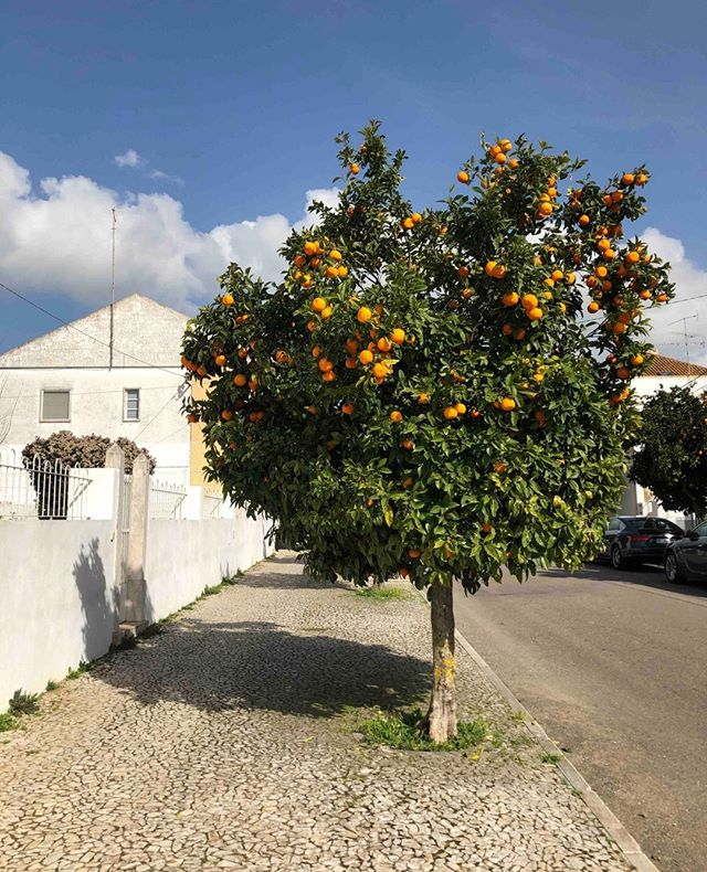 #WildTerrainsPortugal DAY FOUR: We're breaking free from city life and heading to the breathtaking region of Alentejo. During our drive, you'll spot more 🍊and 🍋trees than your mind can handle! Have no fear, we won't miss a chance to stop and pick some. ⁣ ⁣ Our destination is the insta-famous @sao_lourenco_do_barrocal farmhouse hotel, and we're here for a little self care. Work on your tan by the pool. Get a massage. Take a nap in the grass. Pedal a bike through the rolling countryside. The day is yours. ⁣ ⁣ For dinner, we'll meet as a group for a delicious alfresco meal and Portuguese wine pairing at Barrocal's farm restaurant.⁣ ------------------------------------⁣ @wildterrains is a boutique travel company built for creative women. We design group travel experiences that connect like-minded women around the world and support local, women-owned businesses in our destinations.⁣ ------------------------------------⁣ #traveldeeper #mytinyatlas #letsgosomewhere #adventurealways #huckberry #exploremore #passionpassport #darlingmovement #thatsdarling #liveauthentic #peoplescreative #neverstopexploring #takemethere #culturetrip #travelphotographer #visualcollective #electrifytravels #beautifulmatters