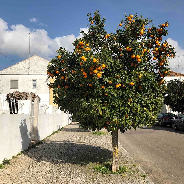 We have to be honest with you...our absolute favorite time of year to be in Portugal is winter, when all the citrus trees are in season. It's a magical experience to drive through Alentejo and see all the trees dripping with oranges and lemons. The weather can be unpredictable in December-February so it's a little hard for us to plan group trips during that time, but our March 21-28, 2020 trip is the perfect chance to catch a glimpse of the tail end of the 🍊 harvest season 😍⁠⠀ ------------------------------------⁠⠀ @wildterrains is a women-fueled travel company. We design awesome group trips that connect like-minded women around the world and we partner with local, women-owned businesses wherever we go.⁠⠀ ------------------------------------⁠⠀ #portugal #portugaltravel #visitportugal #turismodeportugal #tourismportugal #portugaltrip #destinationeurope #iloveportugal #exploreportugal #portugalovers #explore #discovertheworld #destinations #passionfortravel #wanderlust #globetrotter #welivetoexplore #holiday #getaway #girlsgetaway #makeitlast #wearetravelgirls #orangeharvest #harvestseason #flashesofdelight #thatsdarling #wintertravel