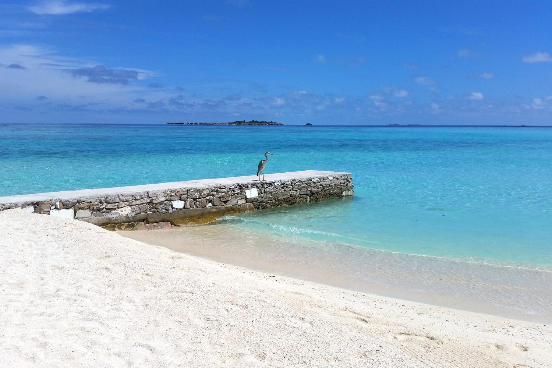velassaru-maldives-globetrotter-character-32-c32-lifestyle