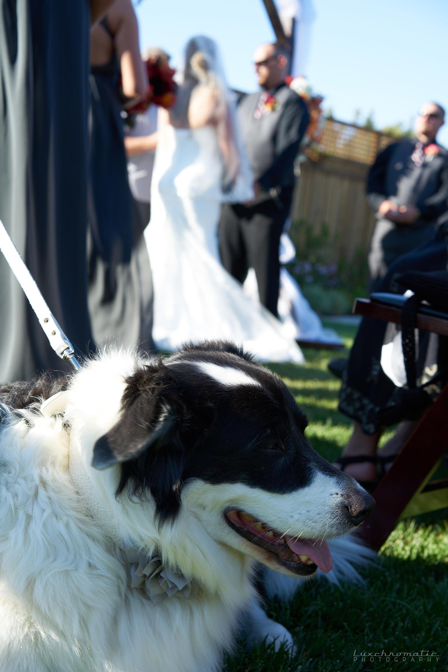 081217_Rachel_Chris_a0440-weddingdress-bride-weddingphotography-weddingphotographer-bridal-groom-wedding-engagementring-proposal-brides-diamondring-sonyalpha-sony-sonya9-sonya7rii-sanfrancisco-sf-bayarea-photographer-profoto-murrietas-well.jpg