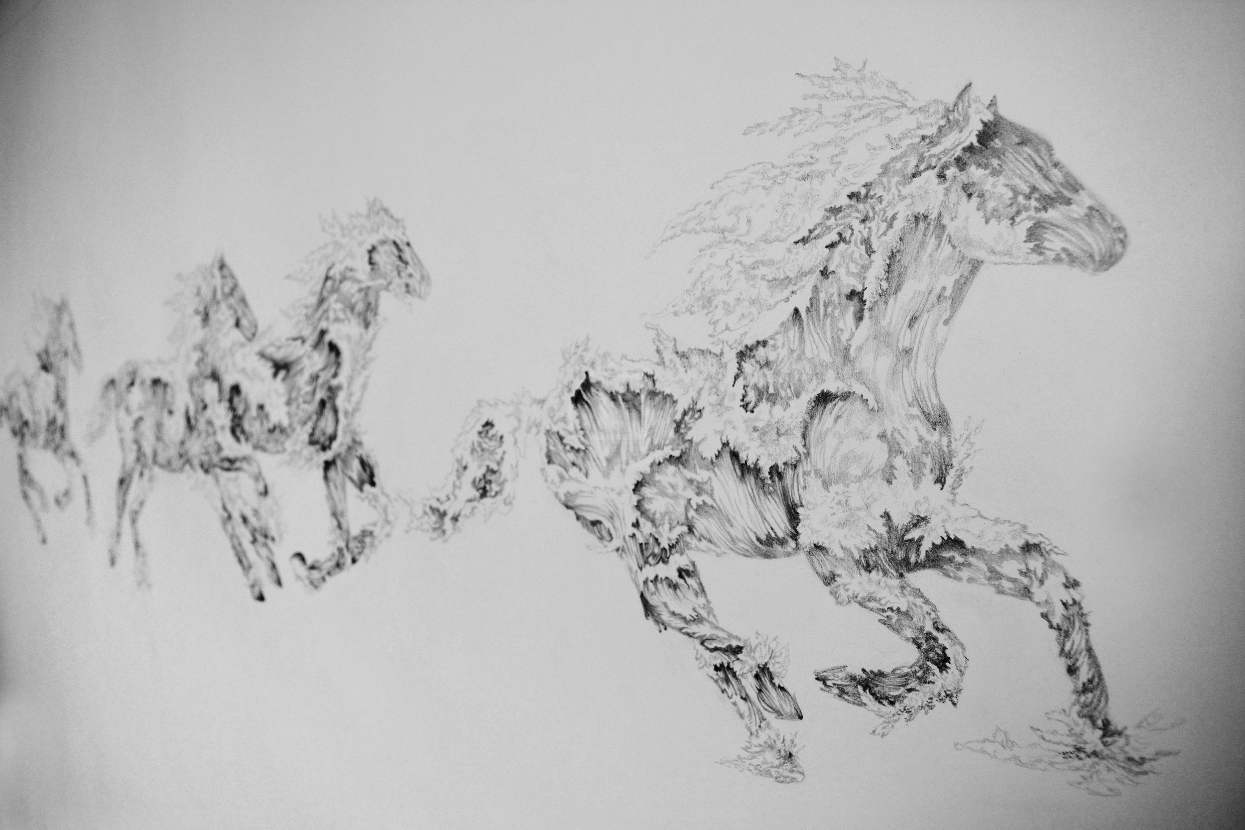 WHEN WAVES WERE HORSES  -  Pencil On Paper - 2016