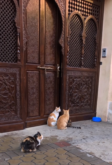 Marrakech cats.