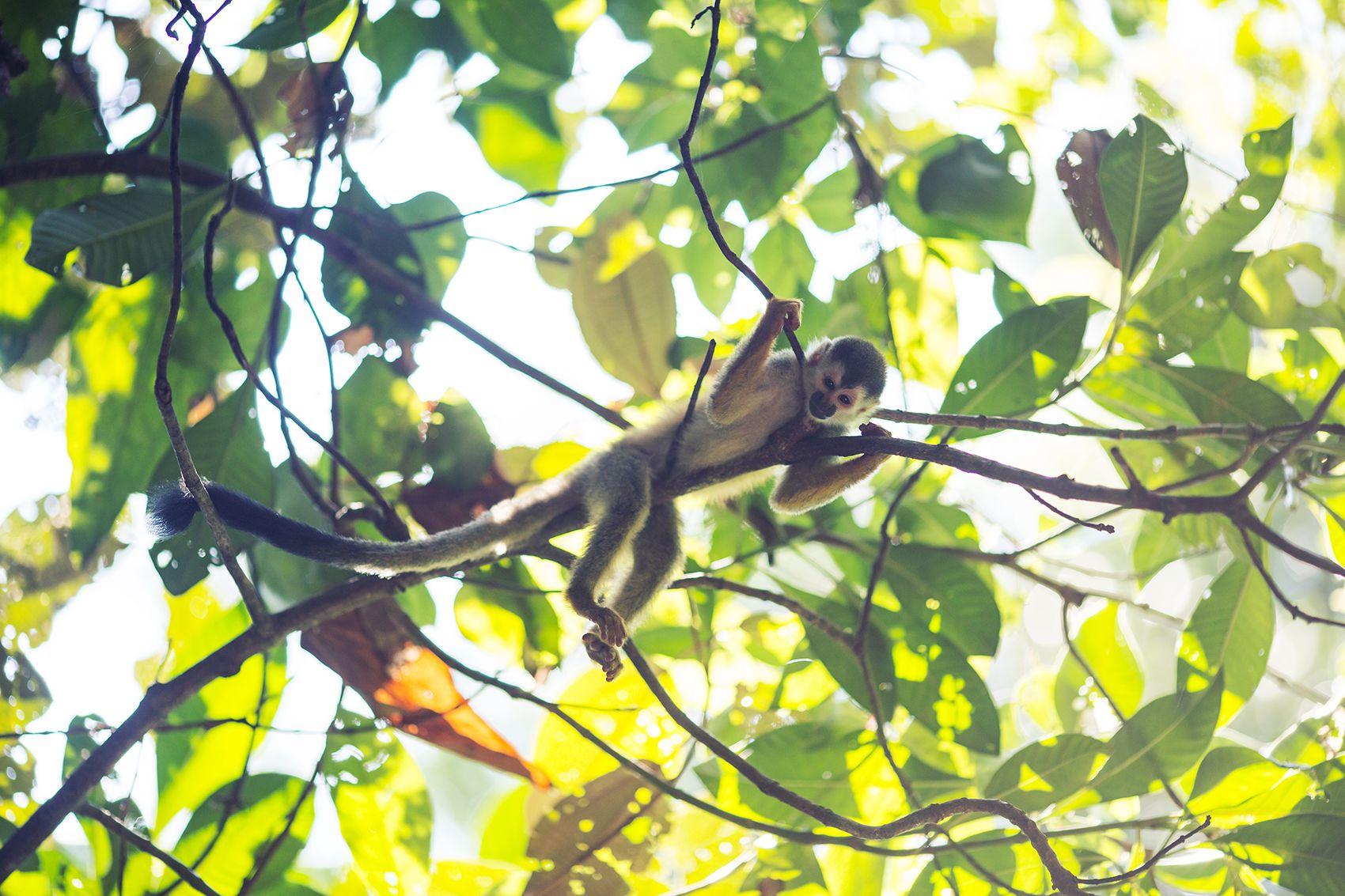 retreat_selva-armonia_yoga-november_2015-monkey2-1.jpg