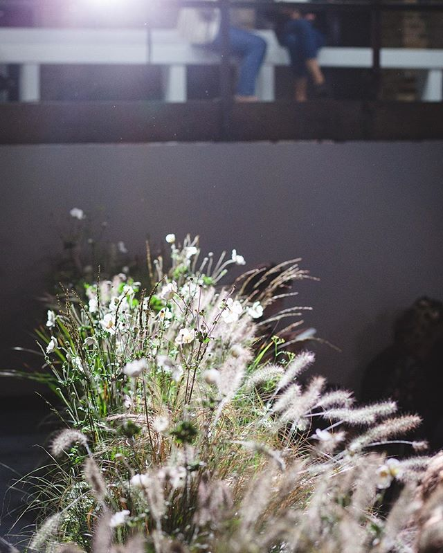 Gorgeous soft light coupled with wild grasses and flowers at Paul Smith SS17  #eventprofs #events #eventphotography #IGLondon #London #paulsmith #wildflowers  #fashion #fashionshow #eventdesign
