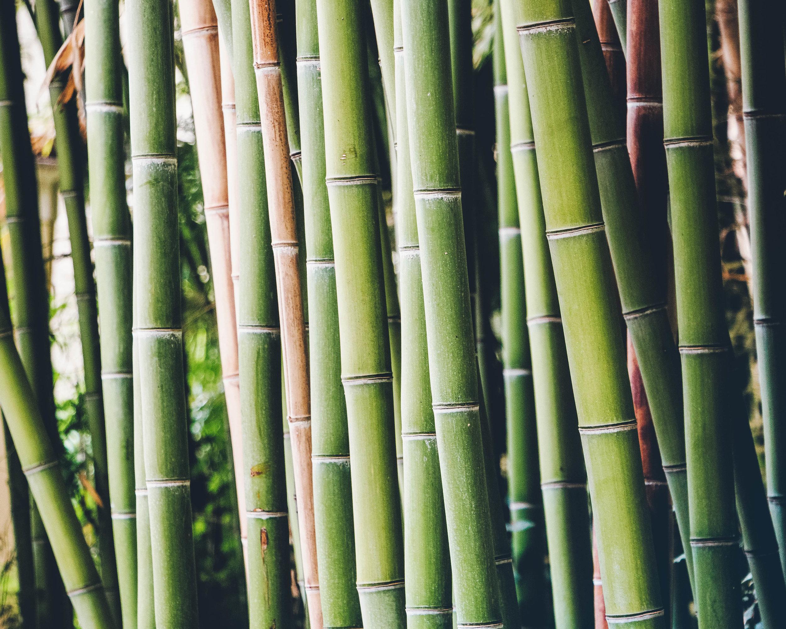 Bambus_EDIT.jpg