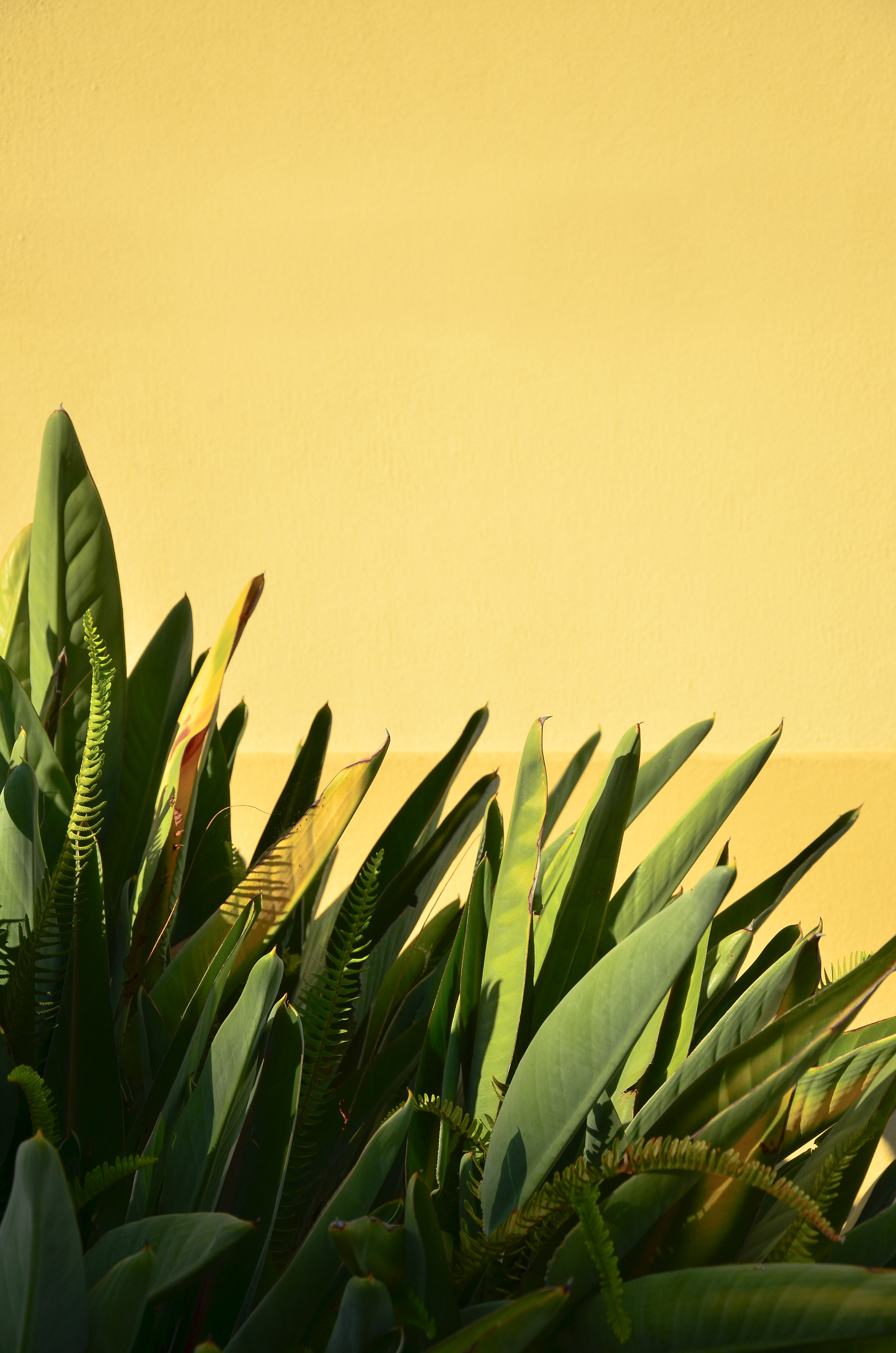 "A beautiful ""Bird of Paradise"" bush shot in Cacilhas, Lisbon, on a toasty summer afternoon."