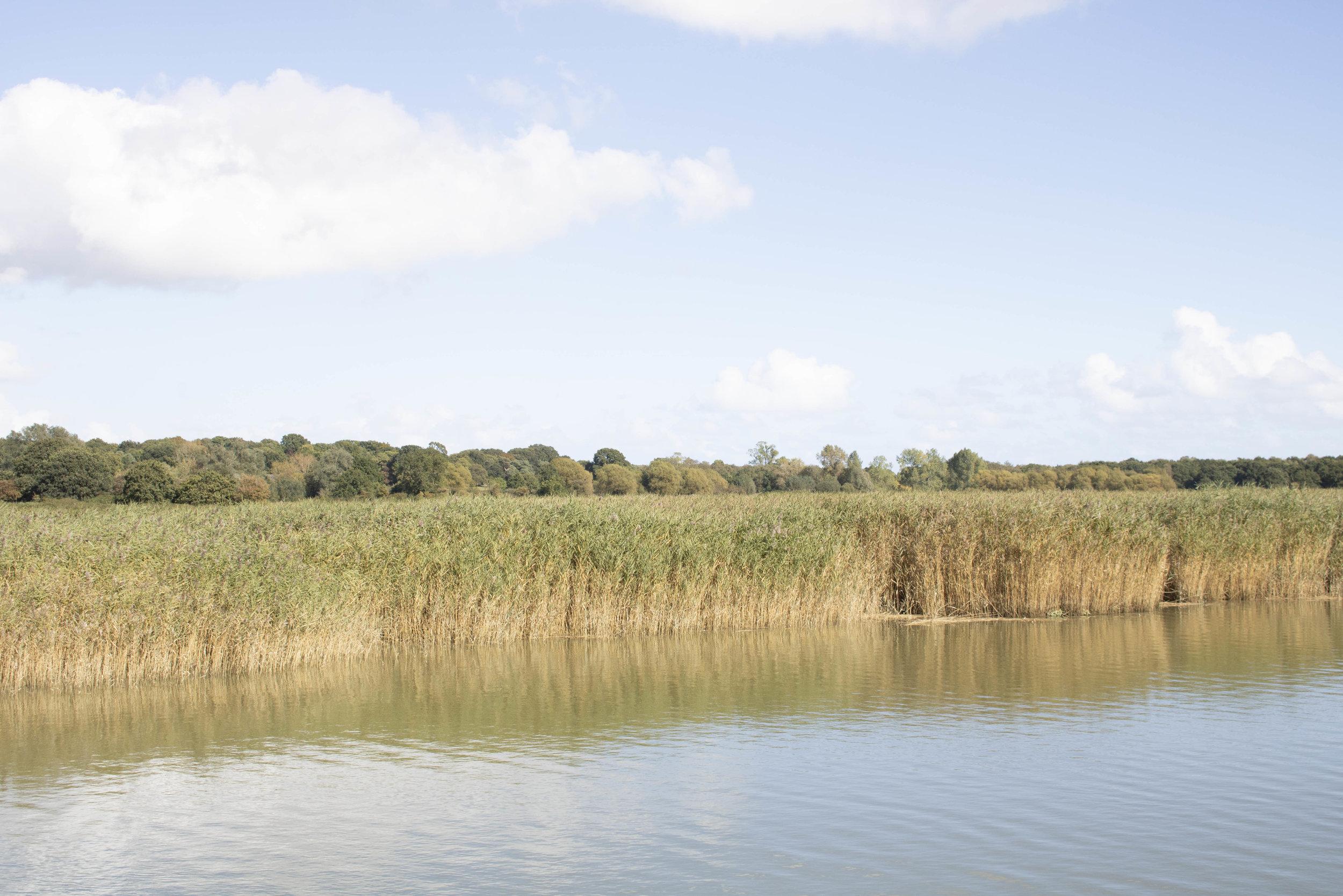 Suffolk .jpg