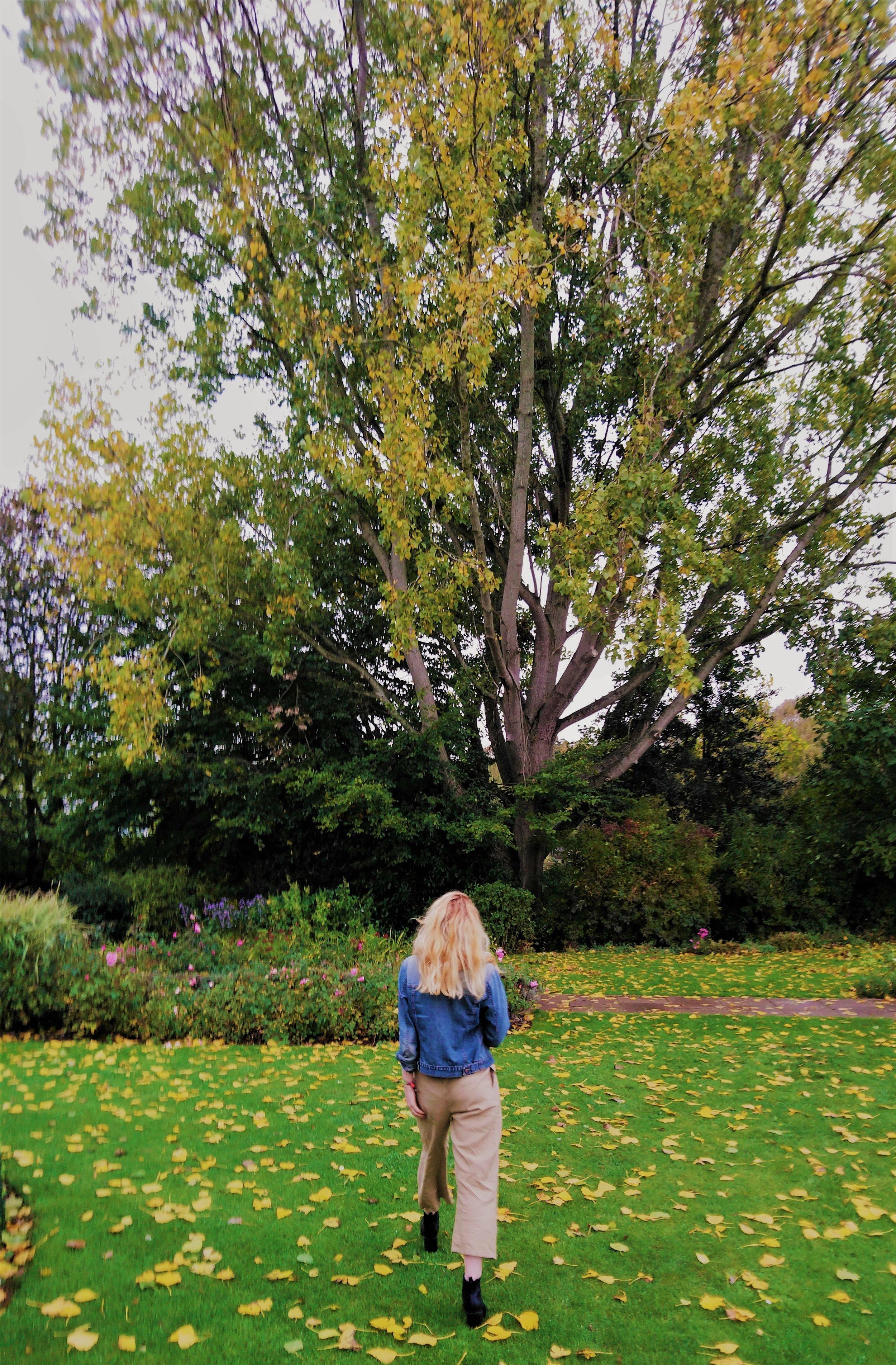 Autumn Favourites.JPG