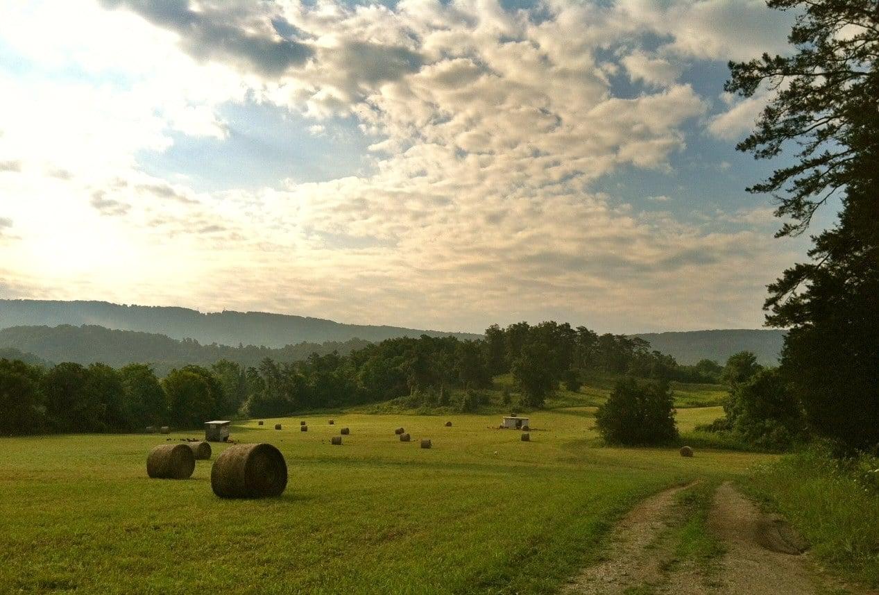 Pasture.jpg