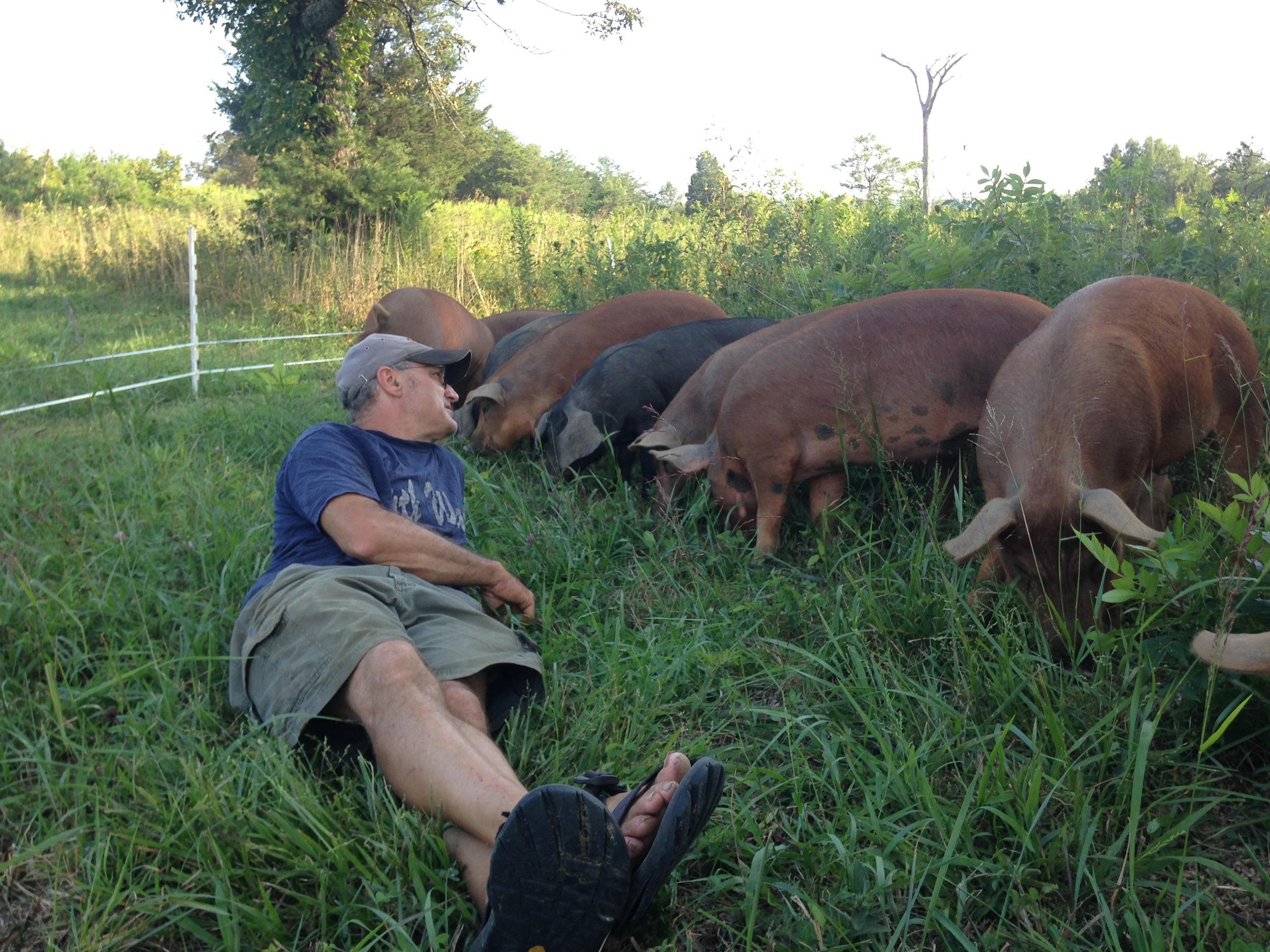 pigs6.jpg