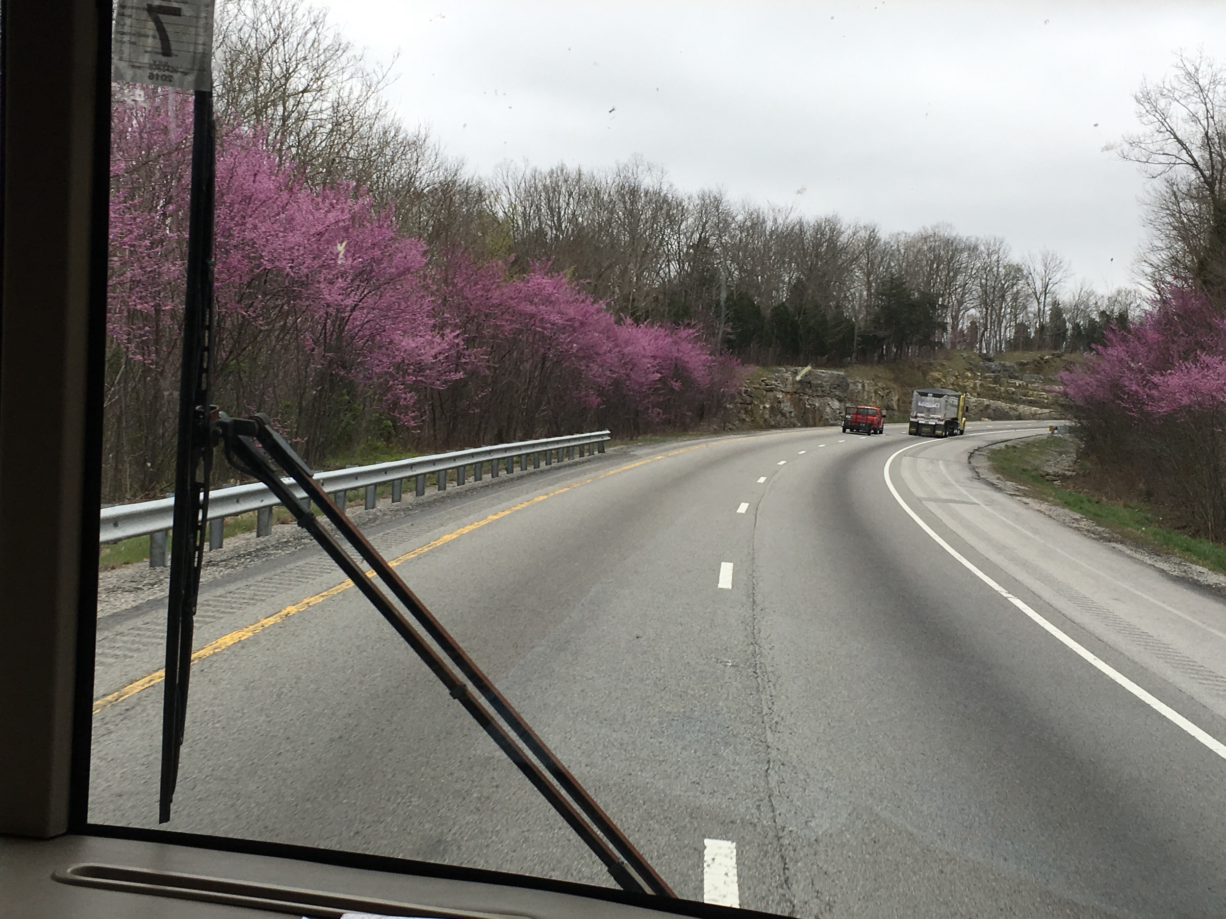 Love the purple trees on the roadside