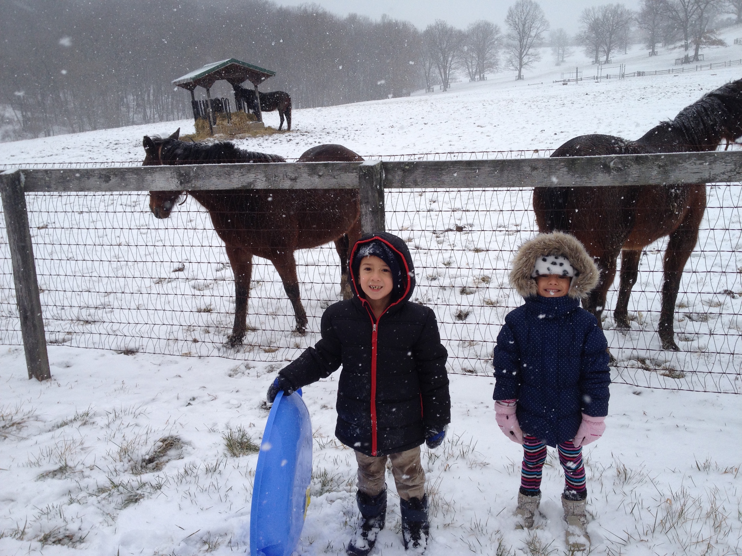 with the horses.jpg