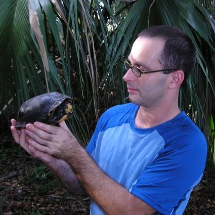 Timothy J. Walsh examining a Gulf Coast box turtle ( Terrapene carolina major ) in Apalachicola, Florida (photograph by GLH)