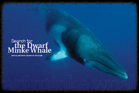 Search For The Dwarf Minke Whale
