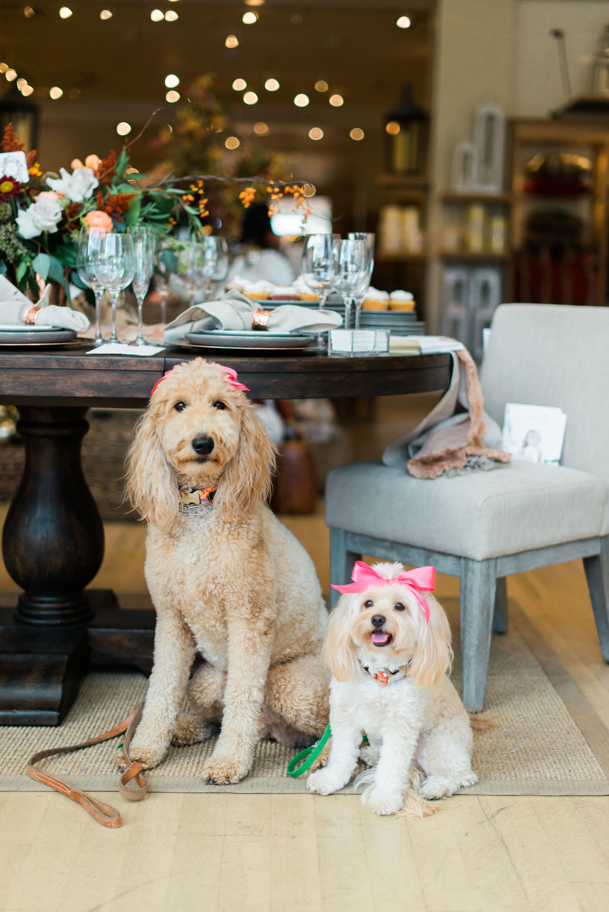 wedding registry tips_pottery barn_adorable dogs.jpg