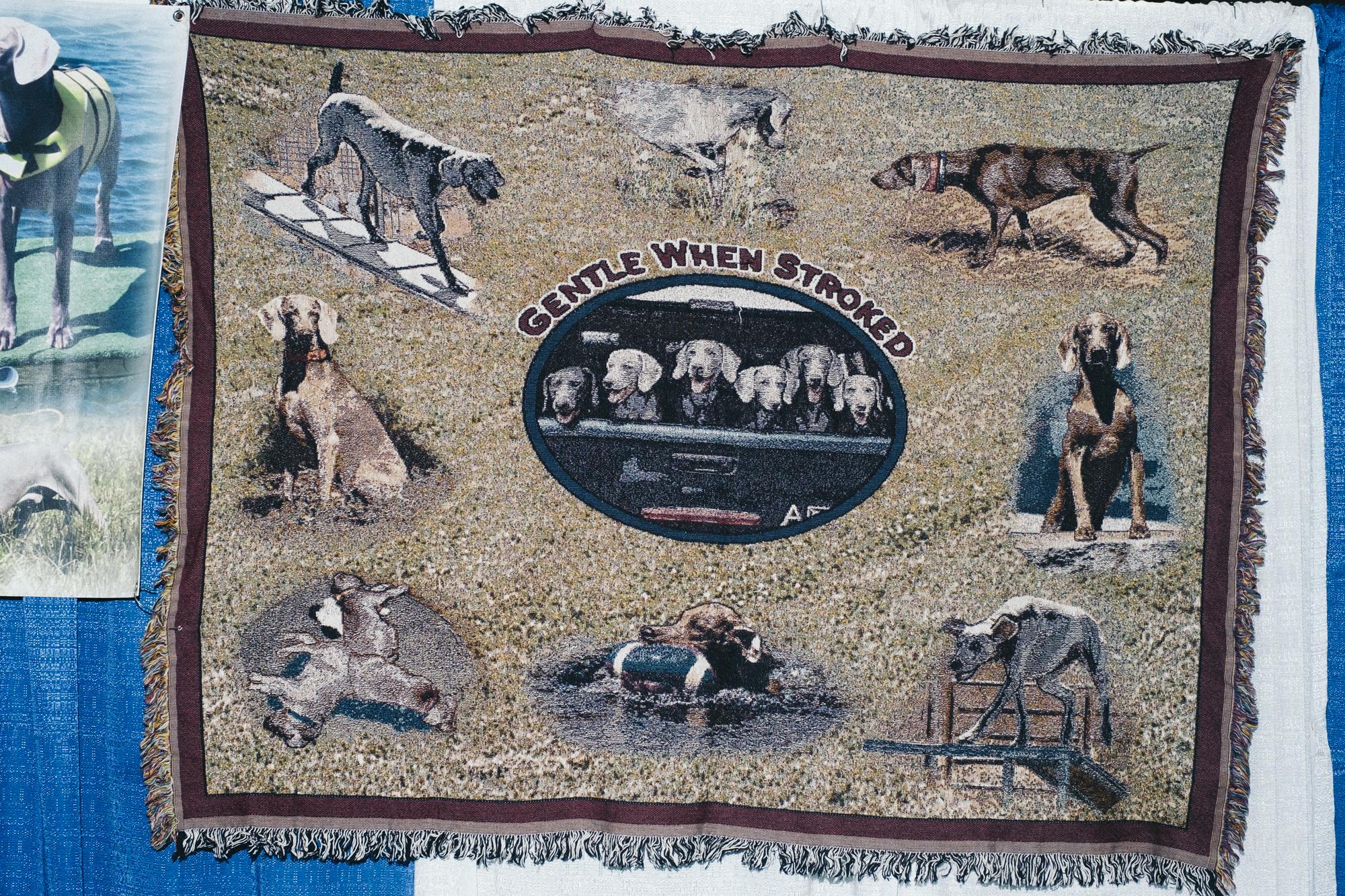 westminster-meet-greet-dogs-16.jpg