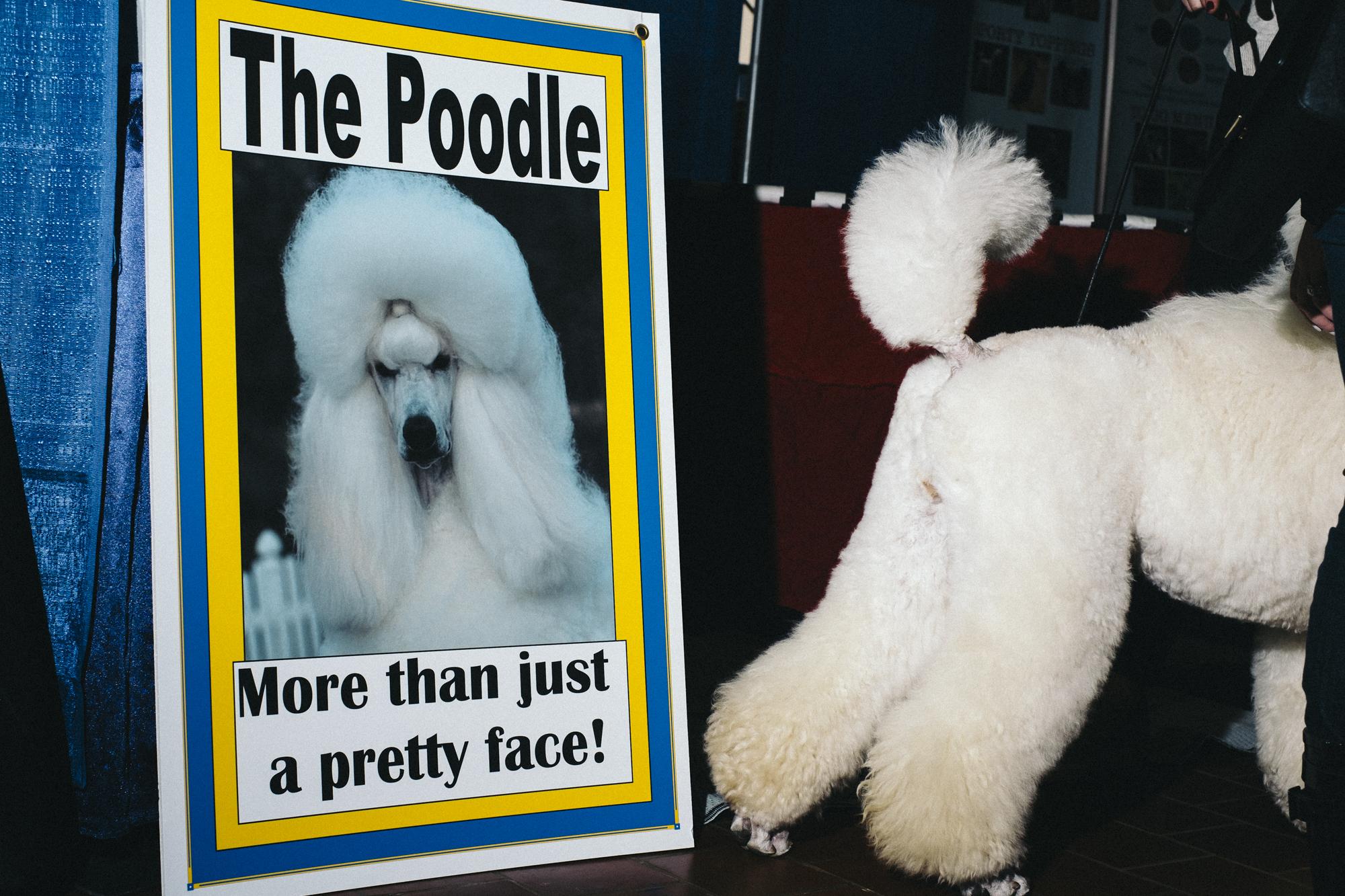 westminster-meet-greet-dogs-11.jpg