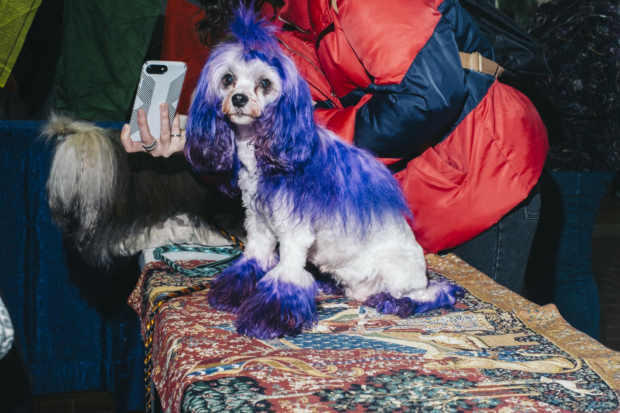 westminster-meet-greet-dogs-7.jpg