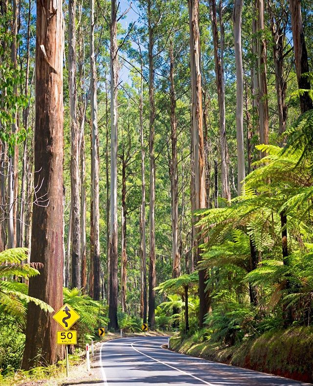 The road trip along the Black Spur in the Yarra Valley is something that everyone should do! ⁠ ⁠ Why not book a stay at BIG4 Yarra Valley Park Lane Holiday Park and do it yourself?⁠ ⁠ LINK IN THE BIO!⁠ ⁠ #ExploreBIG4 #BIG4 #BIG4HolidayParks #SeeAustralia #Glamping #VictoriaAustralia #YarraValley #BlackSpur