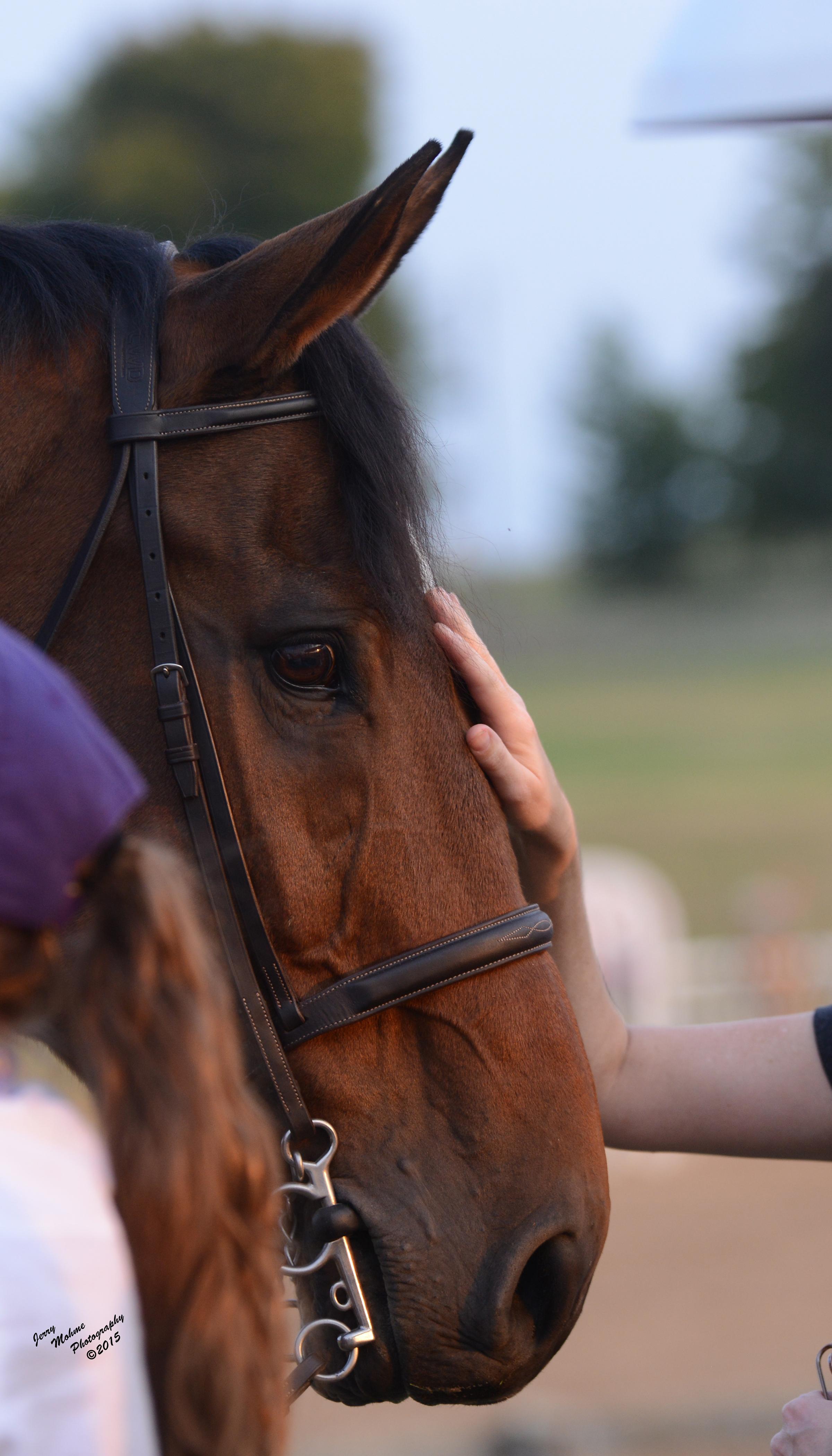 petting horse.jpg