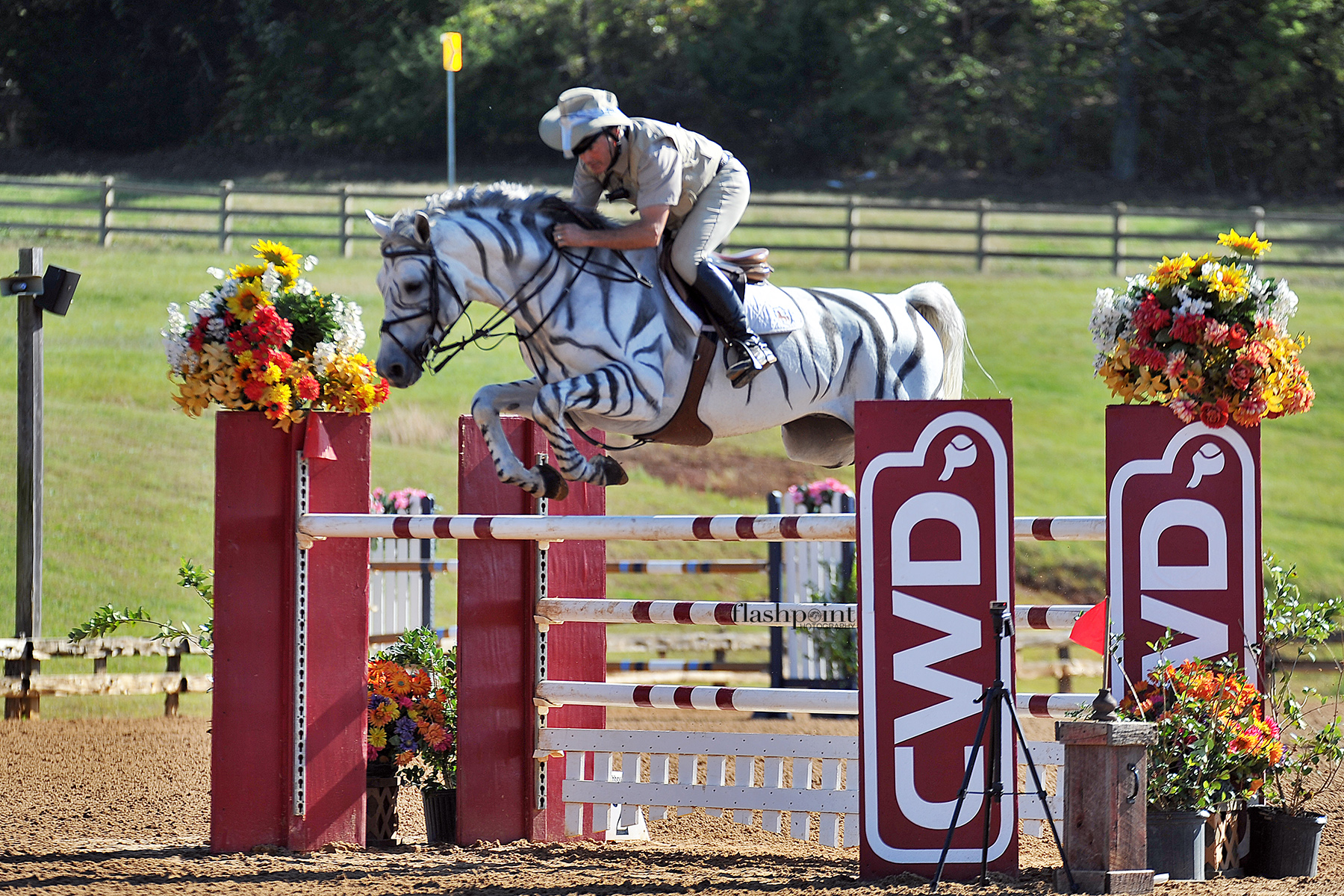 zebra pony jump.jpg