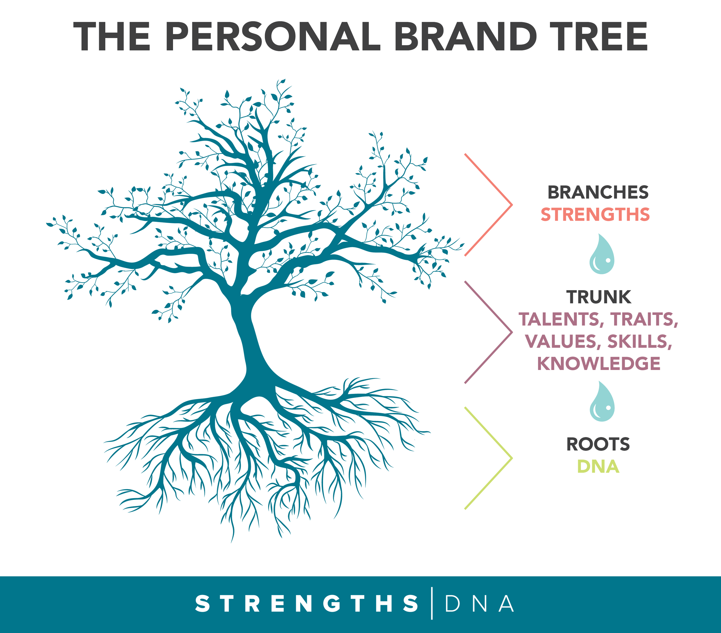 The Personal Brand Tree - The roots are your DNA. The truck is the foundation to which the branches grow from (your authentic self). The branches are your strengths.