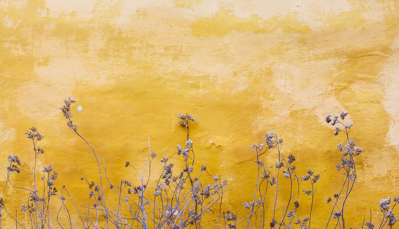 Image by Mona Kendra on Unsplash
