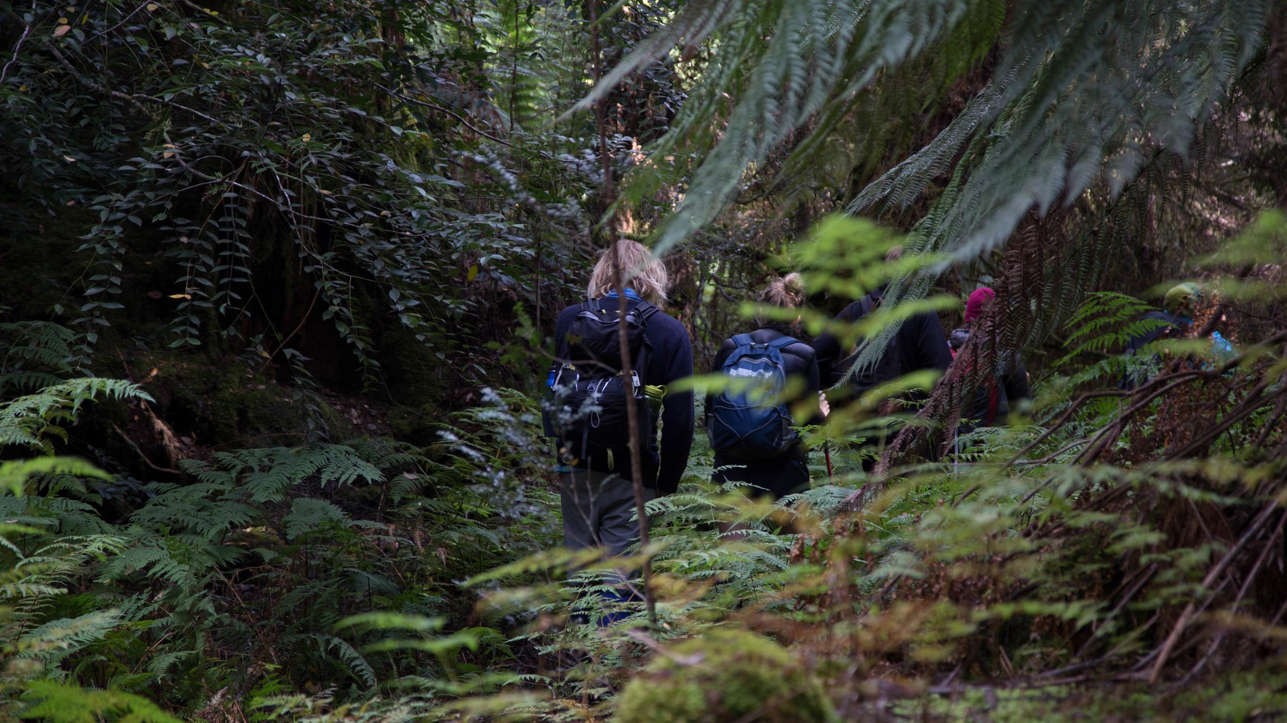 Wild Pedder - Temperate Rainforest Hiking
