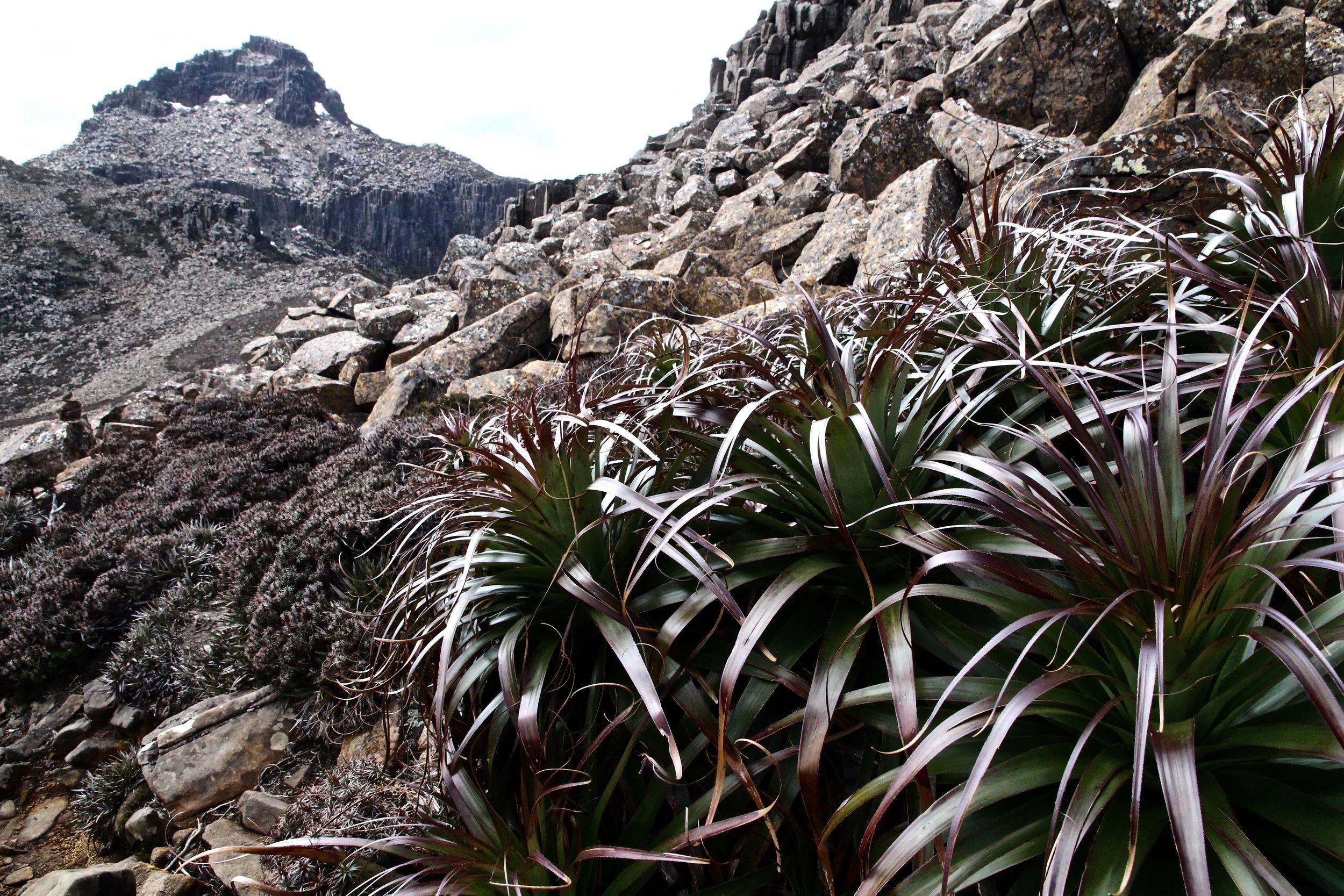 Wild Pedder - Mount Anne