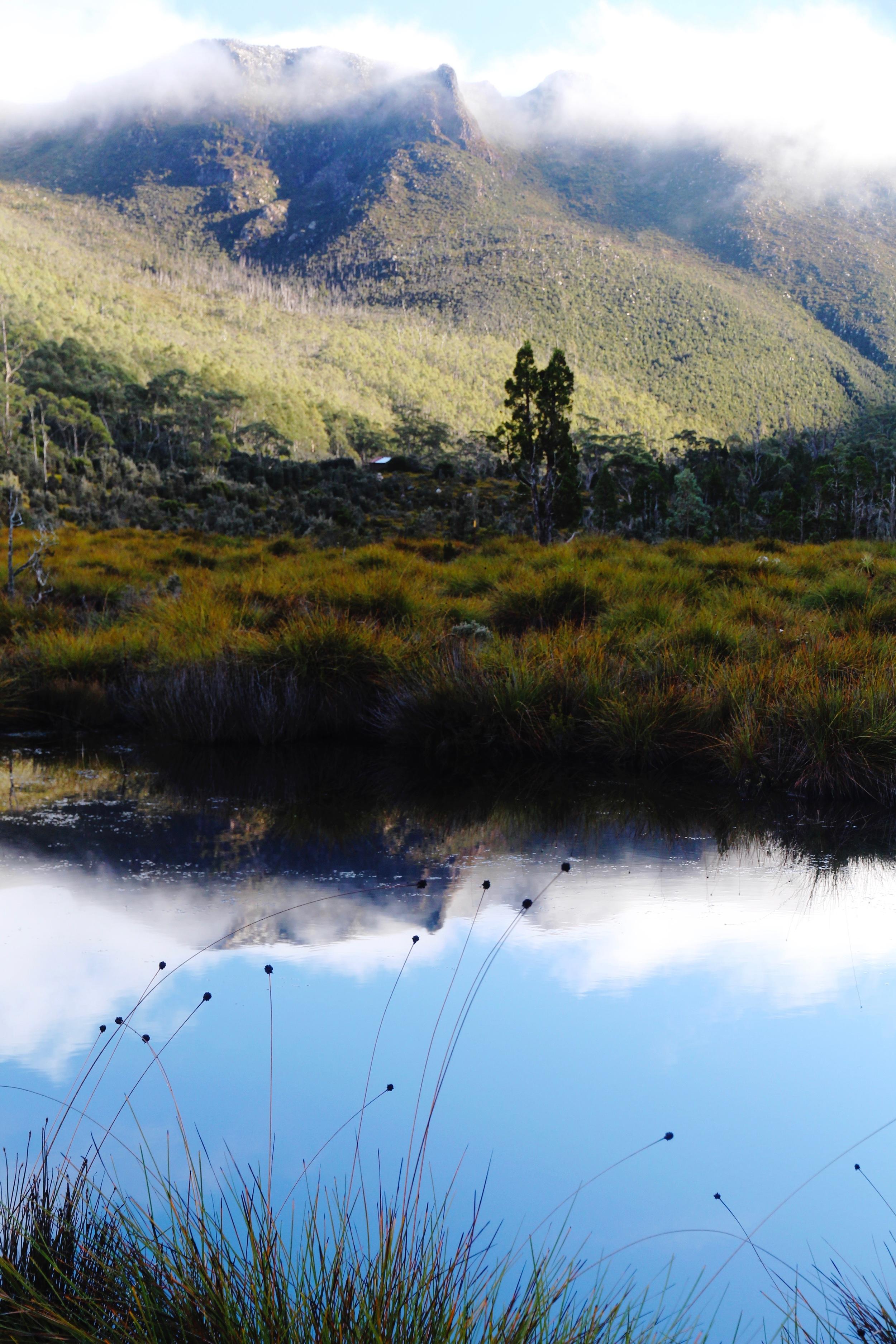 Mount Field National Park: Misty Morning Reflections