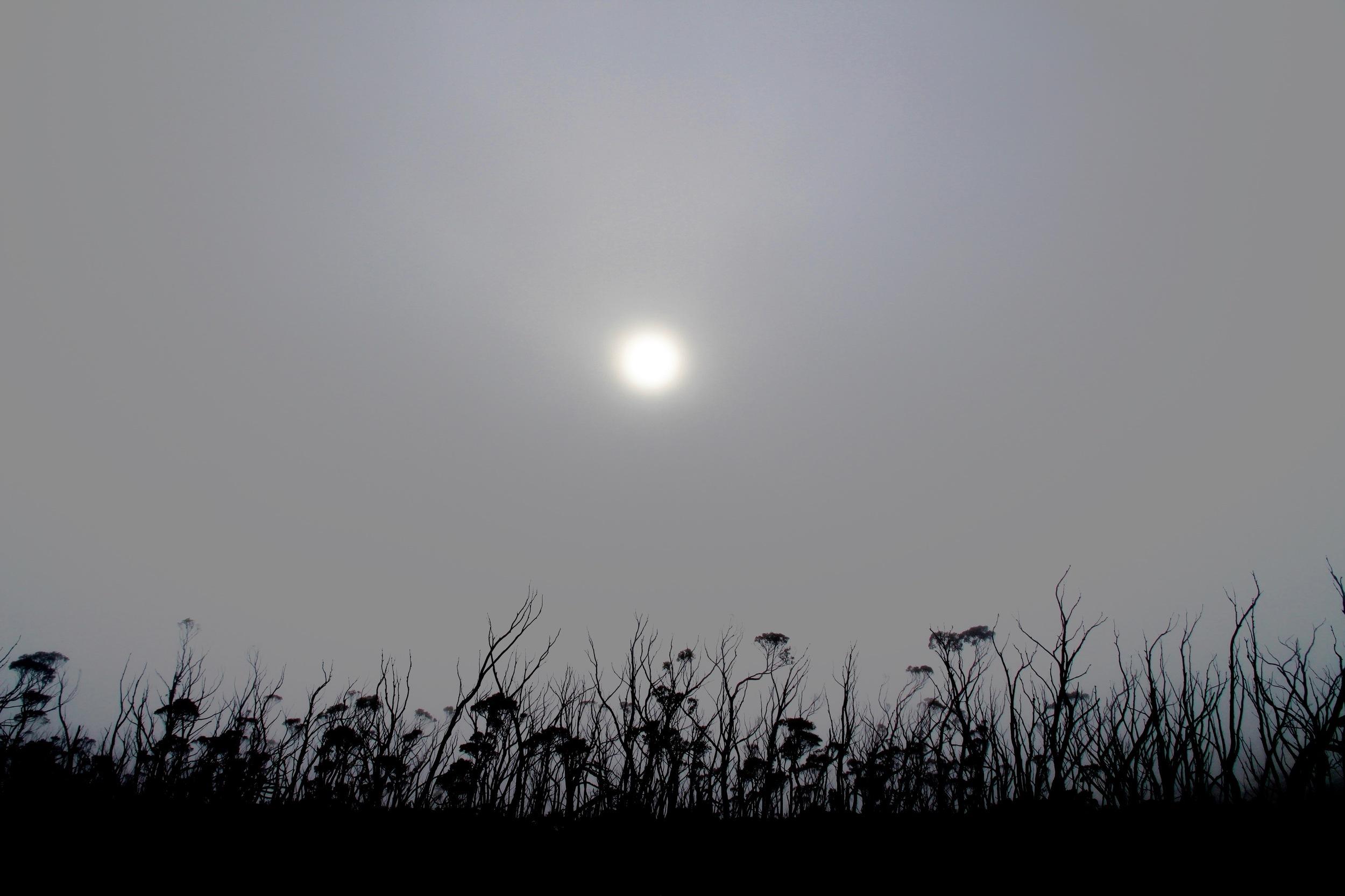 Mount Field Misty Landscape