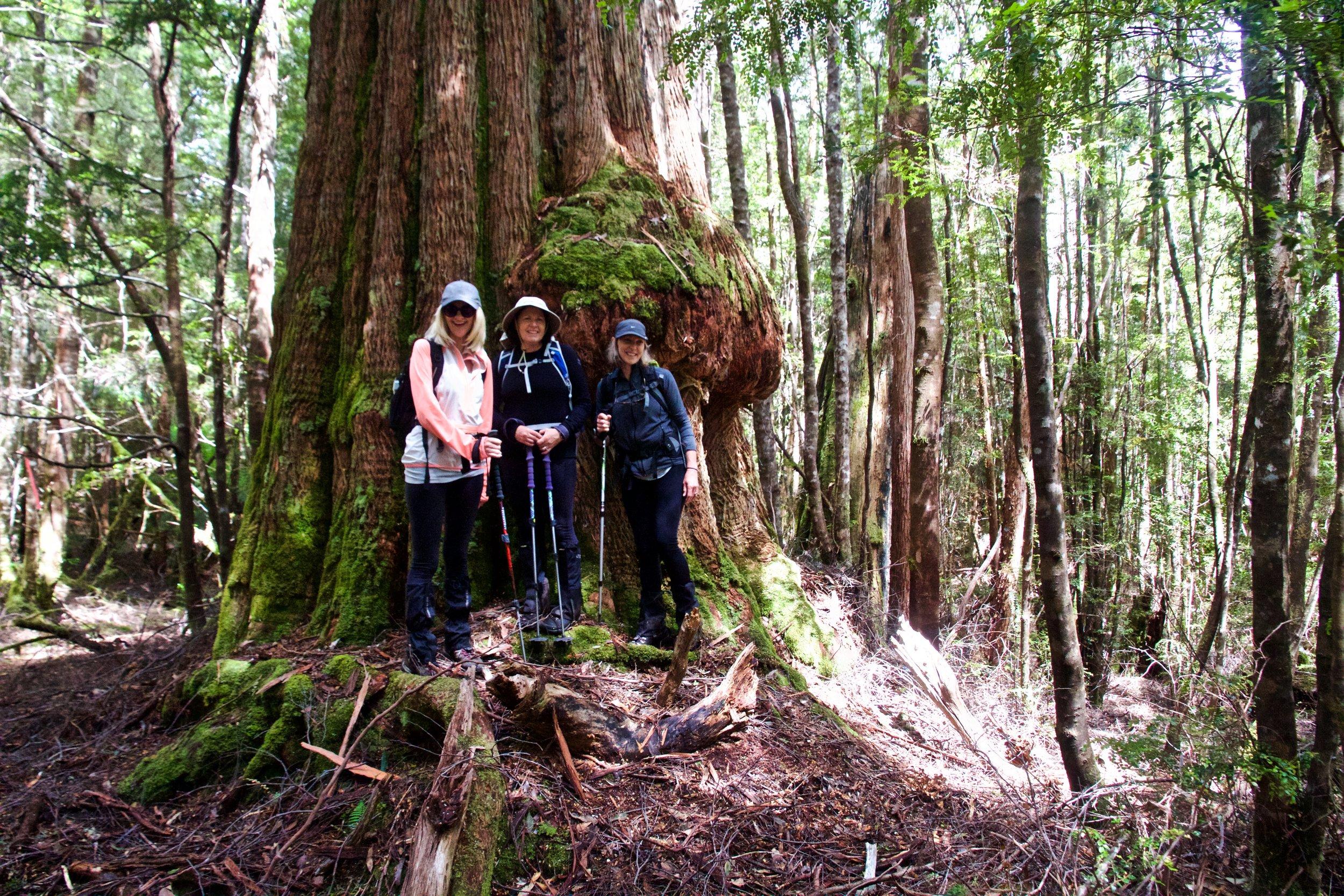 Lyn, Cathy & Chris Against A Massive Eucalyptus!
