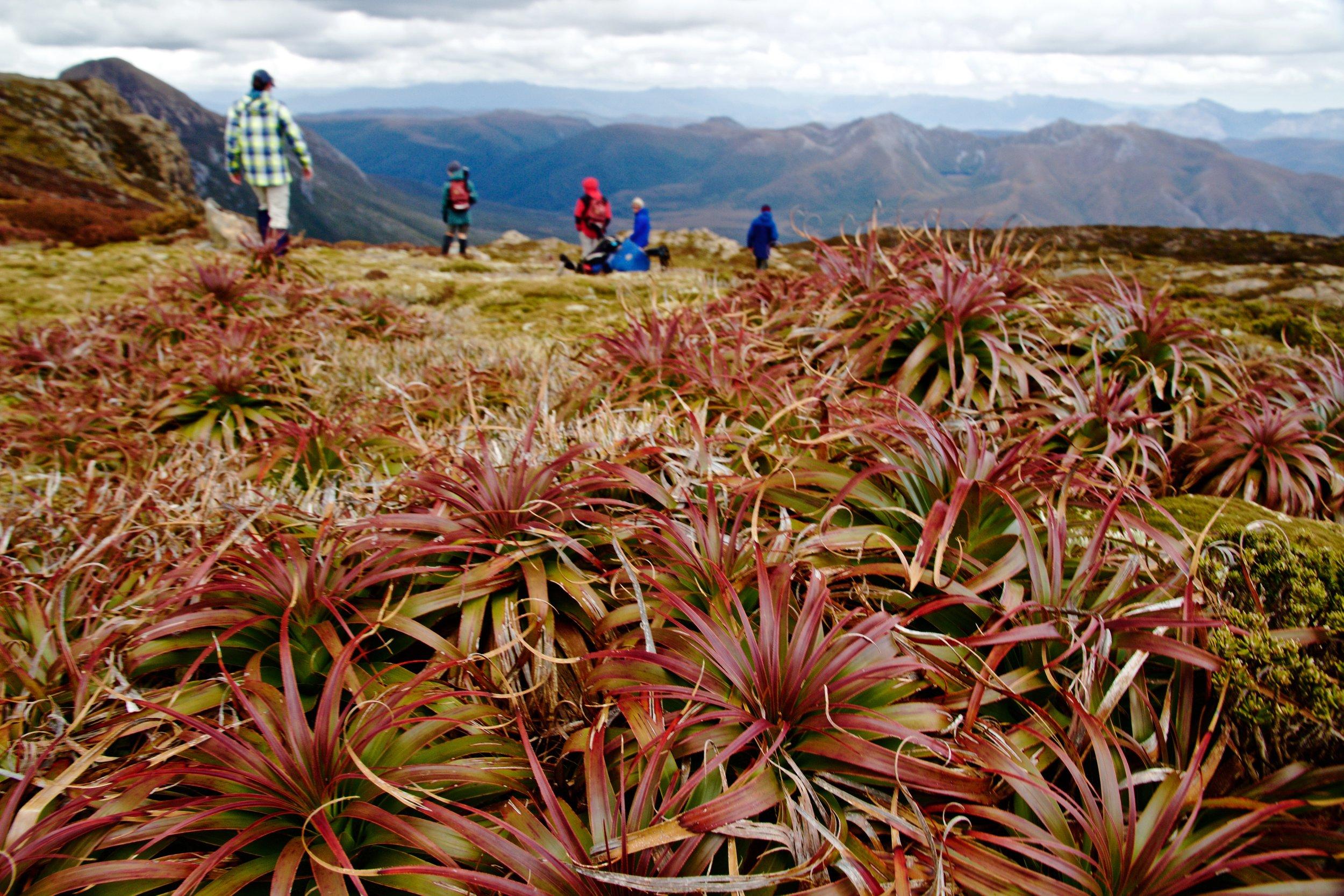 The Miniature Floristic World of Alpine Mount Eliza.