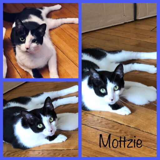 Mottzie