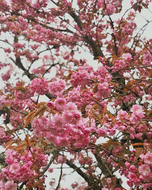 Springtime in Portland. 🌸🌸🌸