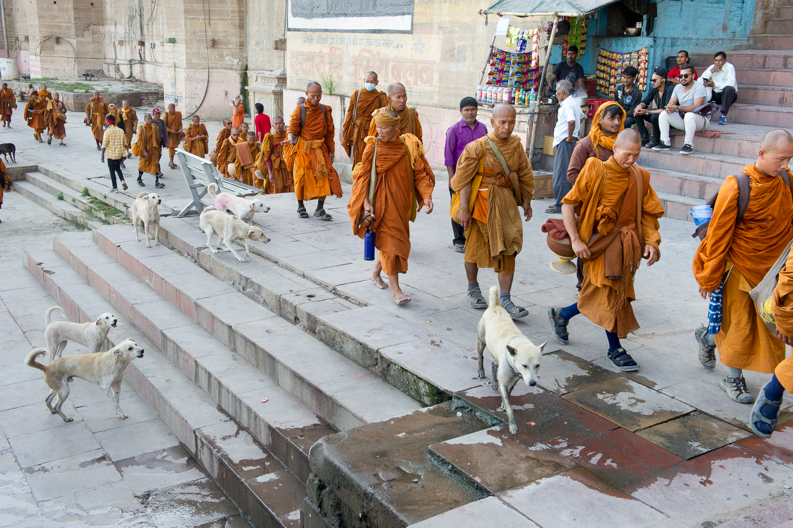 Buddhist monks being chased by dogs on the ghats, Varanasi, 2019