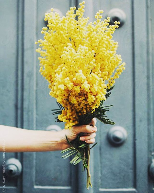 If only 'La Festa Della Donna' lasted all week... In Italy the day is marked with hordes of yellow mimosa flowers that line the streets & are gifted to women by men, children and other women 🌼🇮🇹🌼 #internationalwomensday #iwd #iwd2017 #mimosa #yellow #flowers #tradition #italy #italian #italianlife #women #bouquet