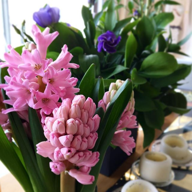 Nothing says Spring quite like the scent of dusky pink hyacinths as they bloom 🌸🌸🌸 #springhassprung #spring #flowers #pink #hyacinth #bloom #sun #sunshine #march #springtime #springlondon #london