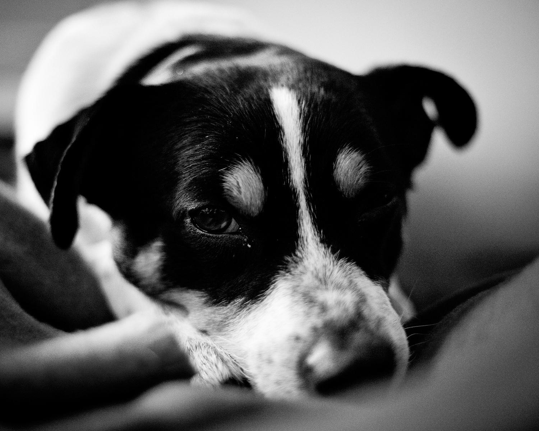 Portretfotografie documentaire zwart-wit zielige hond Honfleur Eindhoven