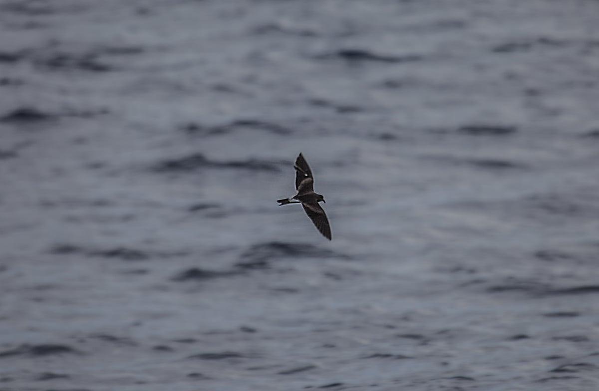 Not so many seabirds were seen in the middle of Atlantic Ocean