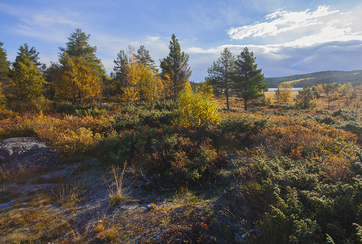 Beautiful autumn colors in Norway