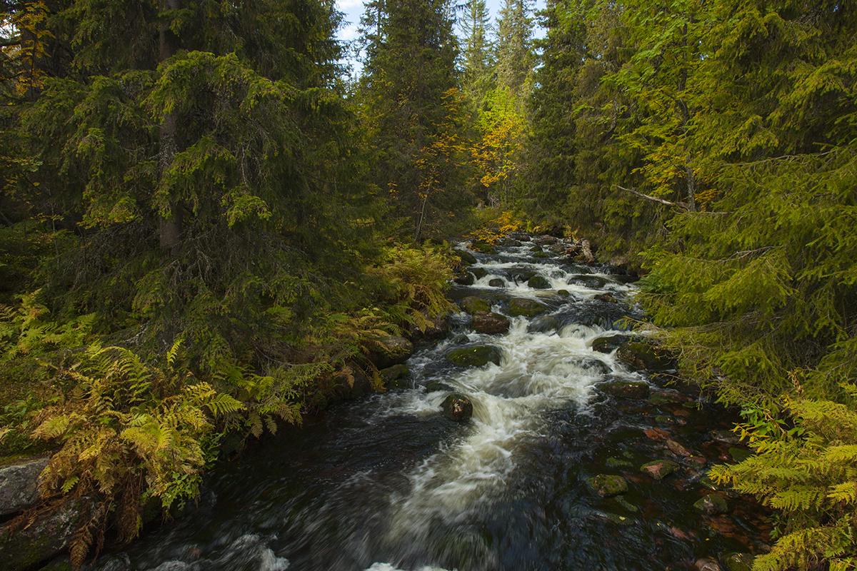 Beautiful forest landscape in Sweden