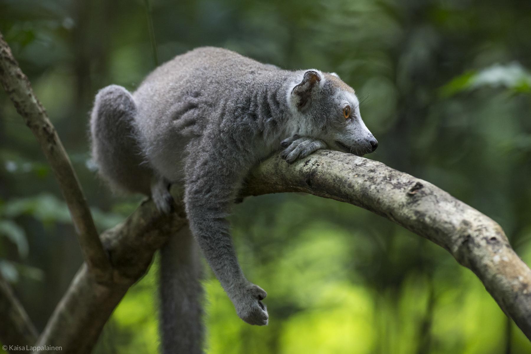 Madagascar2016 (17 of 246).jpg