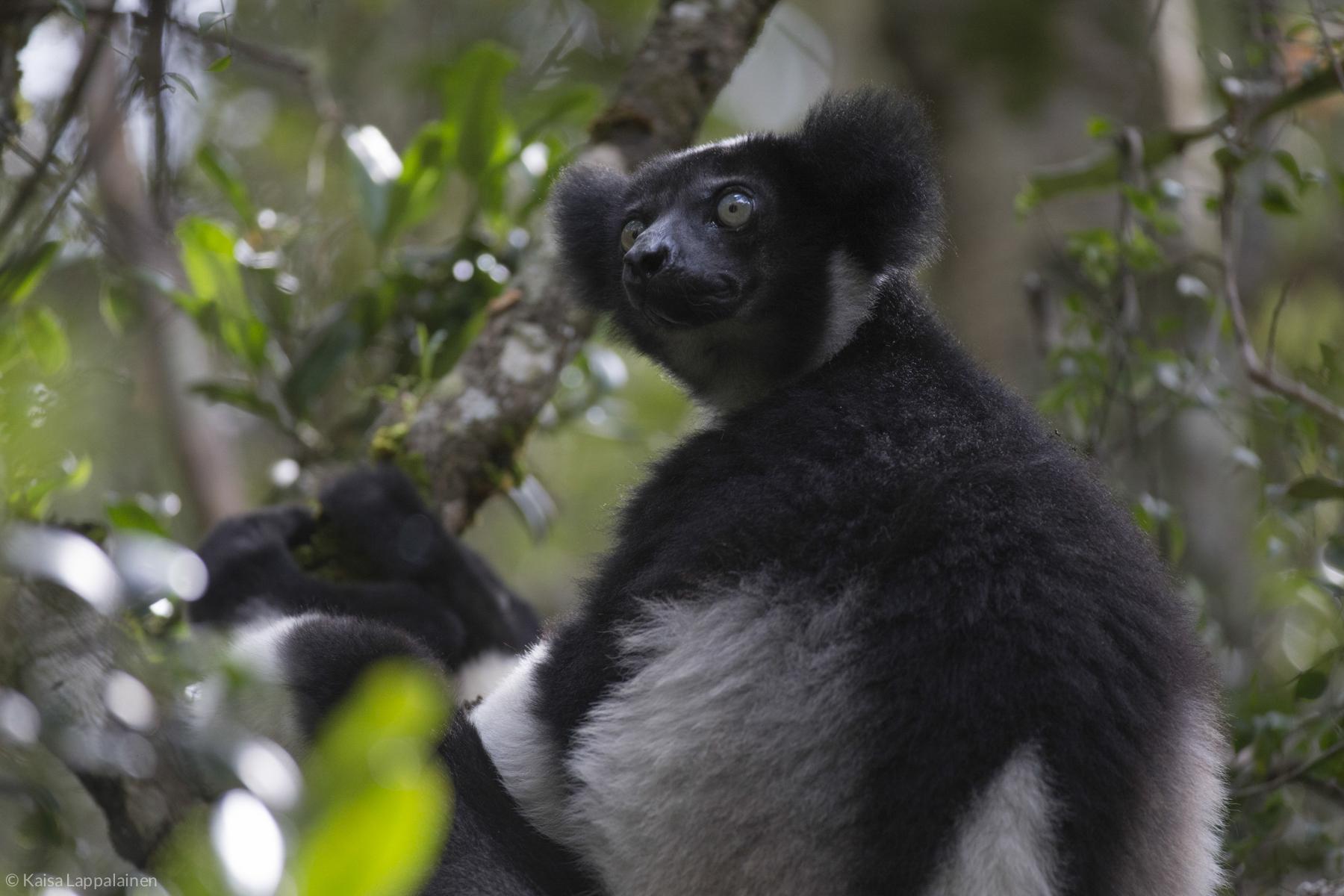 Madagascar2016 (187 of 246).jpg