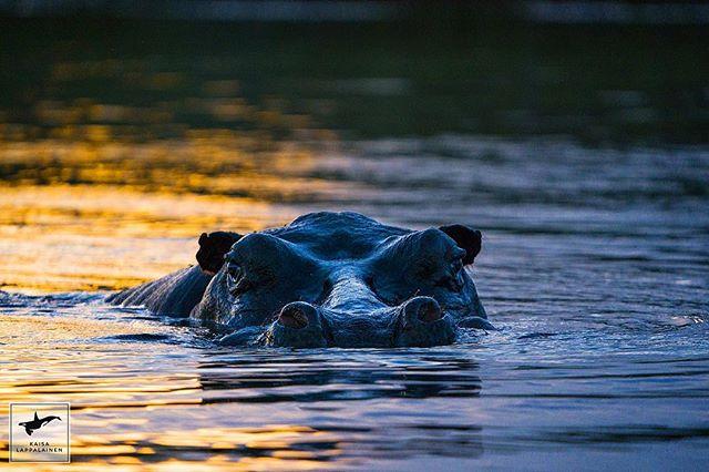 Sunset swimmer 🌅🌌