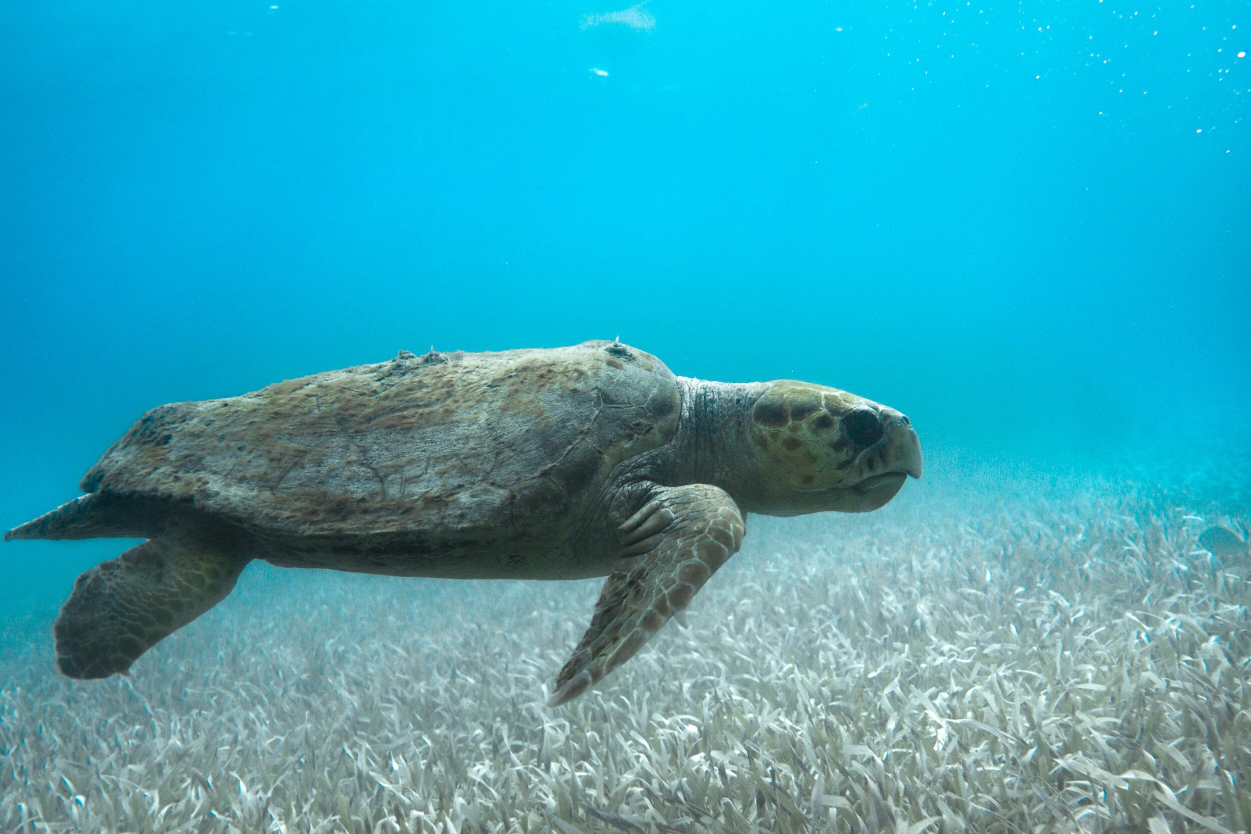 Snorkel the Barrier Reef